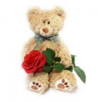 20 inch Bear and a Stem of Rose